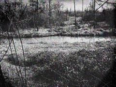 oldswamp.jpg